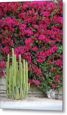 Palm Desert Blooms Metal Print