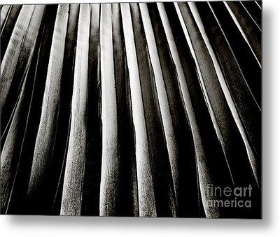 Palm Frond Metal Print by Charmian Vistaunet