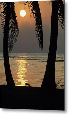 Palm Fronds And Sunset Over Caribbean Metal Print