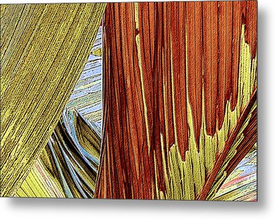Metal Print featuring the photograph Palm Leaf Abstract by Ben and Raisa Gertsberg