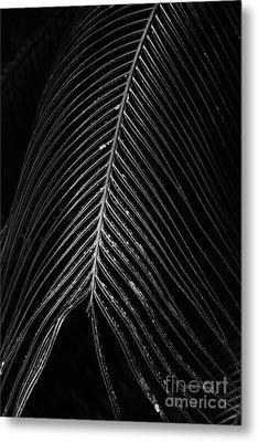 Metal Print featuring the photograph Palm Leaf by Deborah Benoit