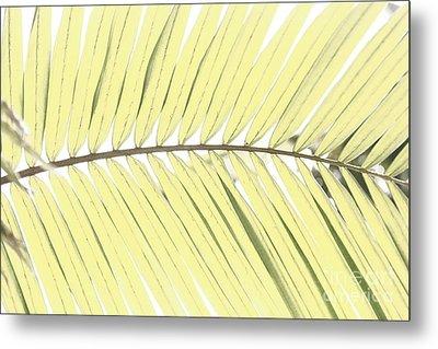 Palm Leaf Metal Print by Gaspar Avila