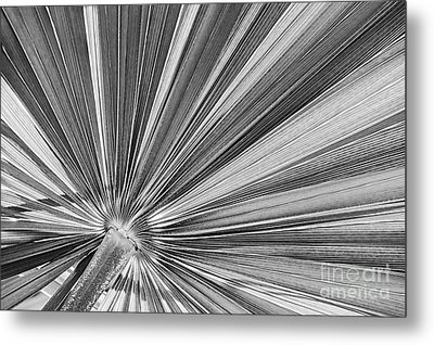Palm Leaf In Black And White Metal Print
