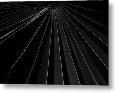 Palm Leaf Metal Print by Roger Mullenhour