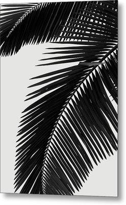 Palm Leaves Bw Metal Print by Rafael Farias