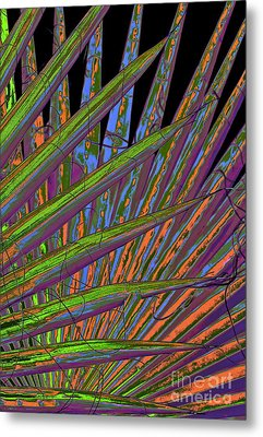 Palm Meanings Metal Print by Gwyn Newcombe