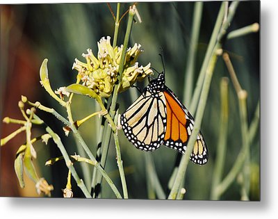 Metal Print featuring the photograph Palm Springs Monarch by Kyle Hanson