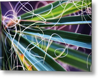 Palm Strings Metal Print