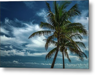 Palm Tree Against The Sky Metal Print