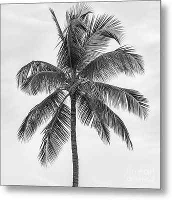 Palm Tree Metal Print by Elena Elisseeva