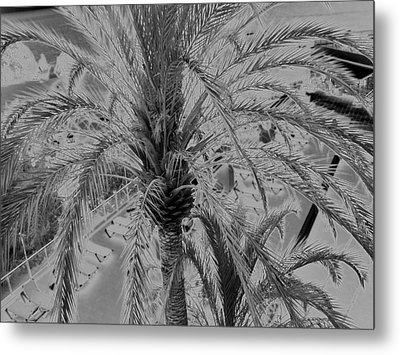 Palm Tree Metal Print by John Bradburn