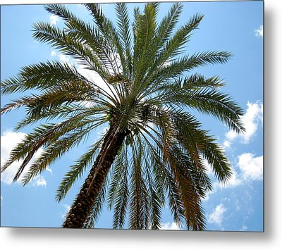 Palm Tree Metal Print by Michael Albright