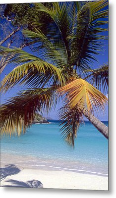 Palm Tree On A Caribbean Beach Metal Print by George Oze