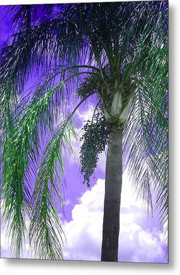 Metal Print featuring the photograph Palm Tree Seeding by Rosalie Scanlon