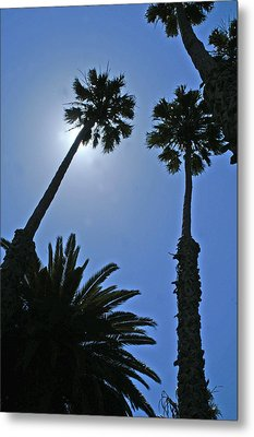 Metal Print featuring the photograph Palm Tree Silouette by Gary Brandes