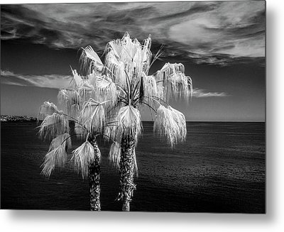 Metal Print featuring the photograph Palm Trees At Laguna Beach In Infrared Black And White by Randall Nyhof