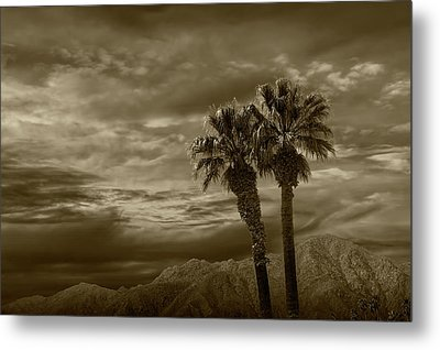Metal Print featuring the photograph Palm Trees By Borrego Springs In Sepia Tone by Randall Nyhof
