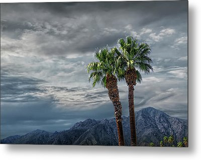 Metal Print featuring the photograph Palm Trees By Borrego Springs In The Anza-borrego Desert State Park by Randall Nyhof