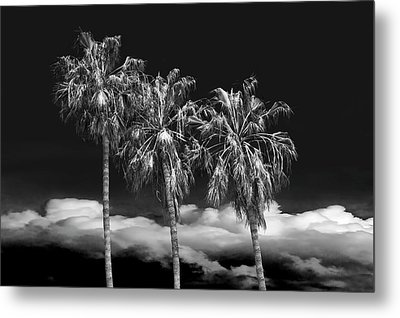 Metal Print featuring the photograph Palm Trees In Black And White On Cabrillo Beach by Randall Nyhof