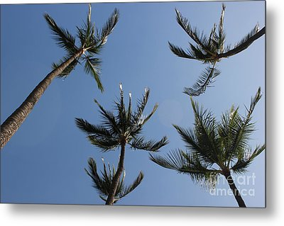 Metal Print featuring the photograph Palm Trees by Wilko Van de Kamp