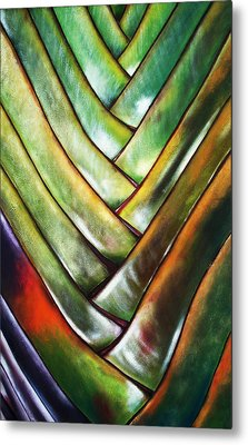 Palma De Madagascar Metal Print by Maribel Garzon