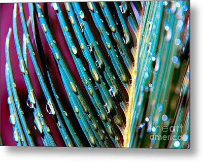 Palms After A Rainy Day Metal Print by Mariola Bitner