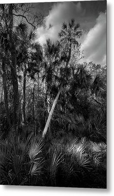 Palms And Palmettos Metal Print by Marvin Spates