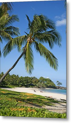 Palms Over Beach Metal Print by Ron Dahlquist - Printscapes