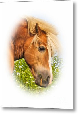 Metal Print featuring the photograph Palomino Head by Debbie Stahre