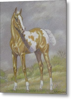 Palomino Paint Foal Metal Print by Dorothy Coatsworth