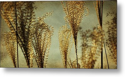 Pampas Grass Metal Print by Amy Tyler
