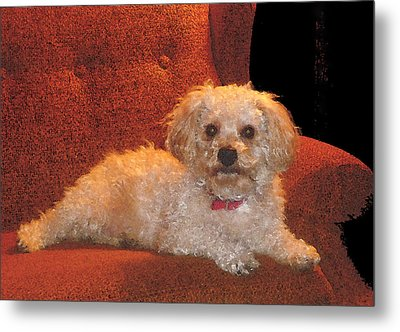 Metal Print featuring the photograph Pampered Pooch  by Margie Avellino