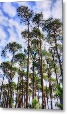 Metal Print featuring the photograph Panhandle Pines by Mel Steinhauer