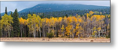 Panorama Of Changing Aspens At Rocky Mountain National Park - Estes Park Colorado Metal Print by Silvio Ligutti