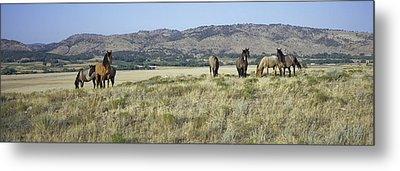 Panoramic Image Of Wild Horses Of Black Metal Print by Panoramic Images