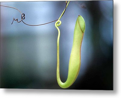 Pan's Green Flute Metal Print by Laurie Paci