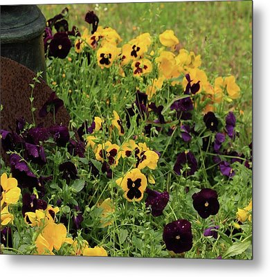 Pansies Metal Print by Kim Henderson