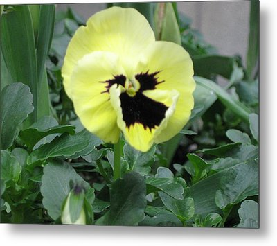 Pansy Metal Print by AJ Brown