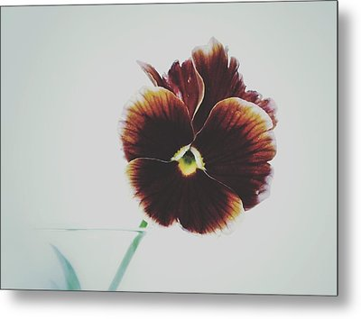 Metal Print featuring the photograph Pansy Face by Karen Stahlros