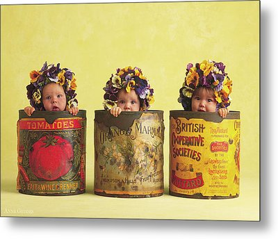 Pansy Tins Metal Print by Anne Geddes