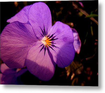 Pansy Metal Print by Yannick Guerin