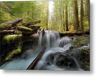 Panther Creek In Gifford Pinchot National Forest Metal Print by David Gn