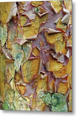 Paperbark Maple Tree Metal Print by Jessica Jenney