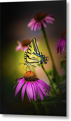 Papilio Metal Print by Jeffrey Jensen