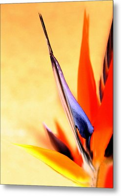 Paradise Lost Metal Print by Marion Cullen