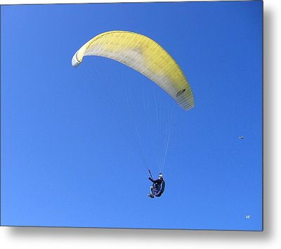 Paraglider And Seagull Metal Print by Will Borden
