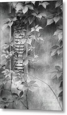 Parallel Botany #0810 Metal Print