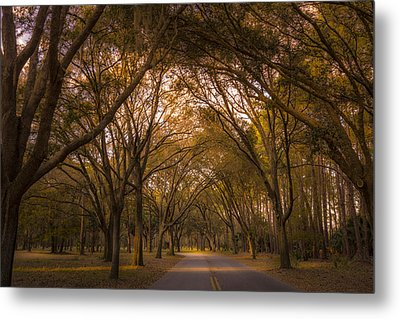 Park Overhang Metal Print by Marvin Spates