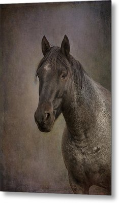 Metal Print featuring the photograph Parker by Debby Herold