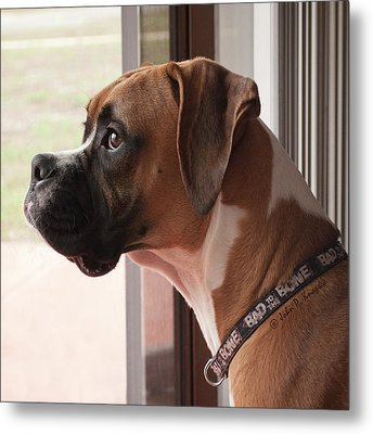 Parker The Boxer Metal Print